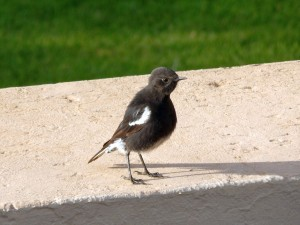 Ant-eating Chat (17)