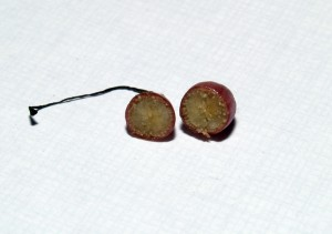 A H. pumila fruit cut open to reveal the small seeds inside