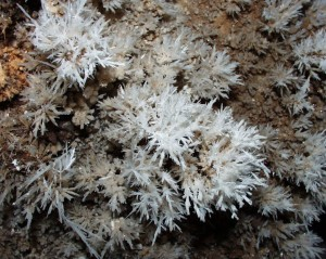 Wind Gat Cave do not have bare walls. Everywhere the walls are simply encrusted with these calcite crystals