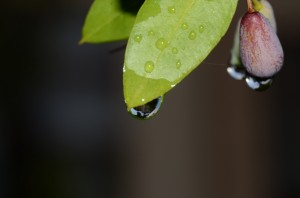 My home in a raindrop!
