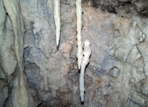 This stalactite has formed an animal-like sculpture!
