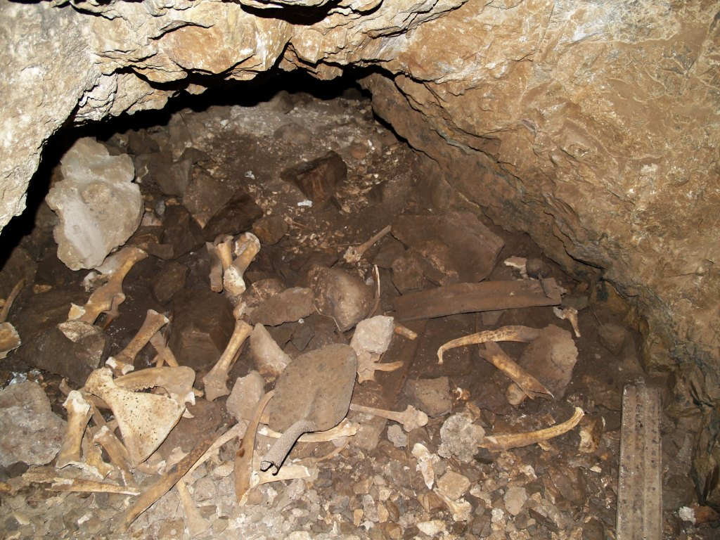 The end of the line in more ways than one! Mining relics (spade and small steel railway sleepers), as well as the bones of a mammal that met its fate in the collapsed end of this cave
